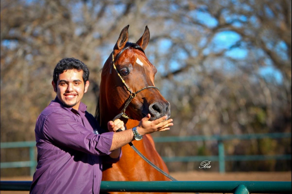 Ali Almomin Arabian Horses Photography Arabian Essence Tv
